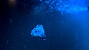 A fish in the sea